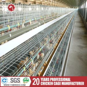 Chicken Farm Automatic Layer Egg Collection System Cage pictures & photos