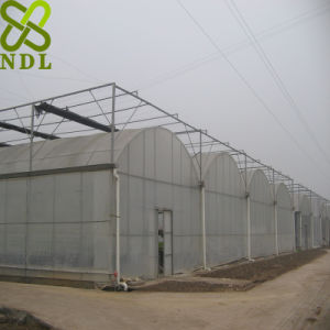 Advanced Plastic Film Agricultural Greenhouse for Rose Planting pictures & photos