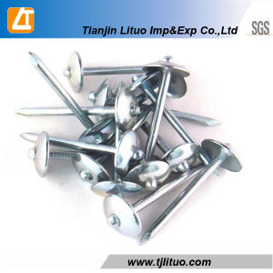 Plain Shank Umbrella Galvanized Roofing Nails pictures & photos