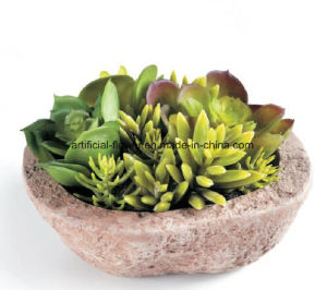 2017 New Design High Quality Artificial Succulent Plants Mini Succulent Plant pictures & photos
