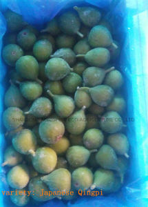 Frozen Fig or IQF Fig pictures & photos