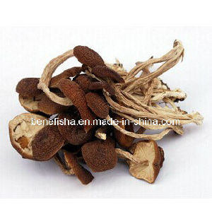 Dried White Fungus pictures & photos
