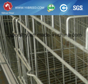 Chikcken Cage/Layer Cage/Layer Chicken Cage or Bird Cage pictures & photos