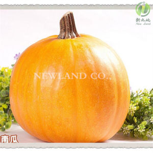 China Snow White Pumpkin Seeds to America pictures & photos