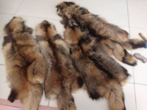 Factory Supply Real Raccoon Fur Skin