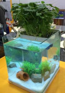 A230-Amphibious Aquarium Water Plants Fish Tank