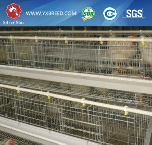 Poultry Chicken Layer Cage to Algeria / Cameroon pictures & photos