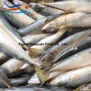 Competitive Frozen Fish Pacific Mackerel pictures & photos