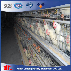 Hot Sale a Type Chicken Layer Cage with Egg Collection System pictures & photos