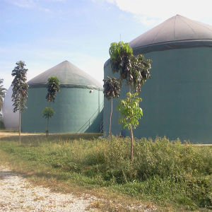 Biogas Power Plant in Malaysia (H series) pictures & photos