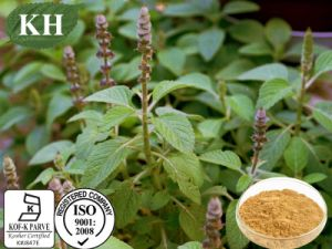 High Quality Coleus Forskohlii Extract Forskolin 10%, 20% pictures & photos