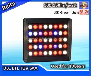 Green Blue Red Color 400W LED Grow Light