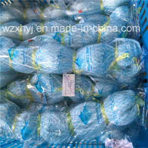 0.28mmx101.6mmst X50md Dws Monofilament Fishing Net pictures & photos