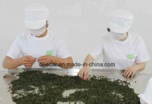 Tea Powder 5000 Mesh pictures & photos