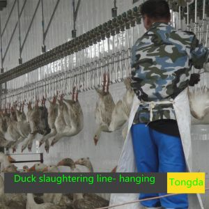 Duck Slaughter Equipment pictures & photos