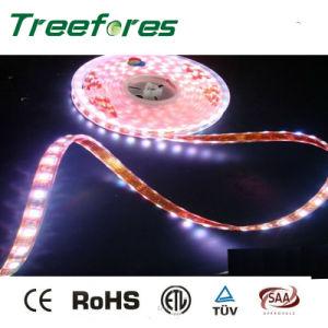 12V 24V 60LED/M 5050 Waterproof LED Strip IP65 pictures & photos