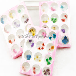 Nail Art Flowers Kit Manicure Beauty Products (D55)