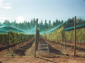 Grape Orchard Anti Hail Net pictures & photos