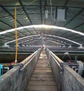 Oxygen Generator for Fish Farming pictures & photos