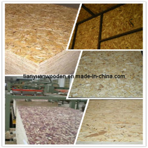 Decorative OSB (Oriented Strand Board) Panel (GL102) pictures & photos