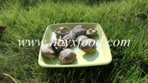 Dried Vegetables Smooth Shiitake Mushroom 1kg Bag pictures & photos