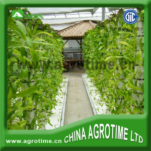 Hydroponic Controllers Greenhouses and Commercial Hydroponic Systems for Tomato Growing