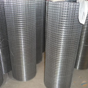 2.5 mm Galvanized Welded Wire Mesh pictures & photos