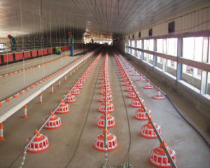 Poultry Shed with Automatic Chicken Farming Equipment pictures & photos