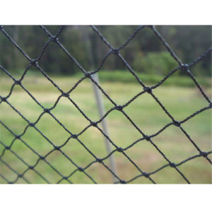 Knotted PE UV Stabilizer Anti Bird Net Mesh pictures & photos
