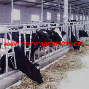 Cow Farm Equipment Cow Headlock pictures & photos