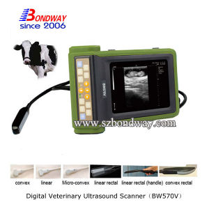 Ultrasonic Hospital Medical Equipment Veterinary Ultrasound Scanner pictures & photos