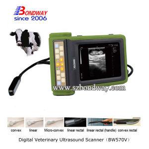 Ultrasonic Hospital Medical Equipment Veterinary Ultrasound Scanner
