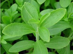 USP Grade Pharmaceutical Raw Material Stevia Leaf Extracts 90%Min. HPLC pictures & photos