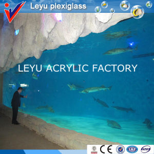 Acrylic Sheet in Public Aquariums with Various Radian pictures & photos