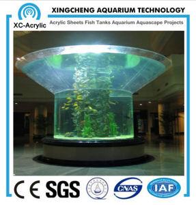 Irregular Acrylic Aquarium/Fish Tank pictures & photos