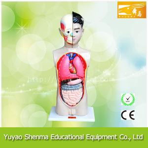 Human Children-Model 65cm / Anatomical Model