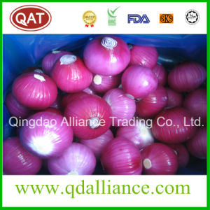Fresh Peeled White Purple Onion with Vacuum Pack pictures & photos