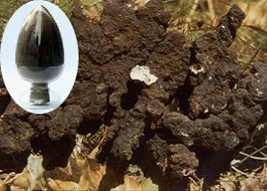 Polyporus Umbellatus Extract