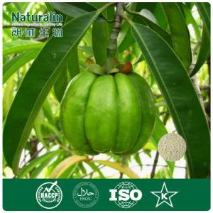 100% Organic Garcinia Cambogia Extract Powder GMP Certified Garcinia Cambogia Extract 80% Hca for Lose Weight