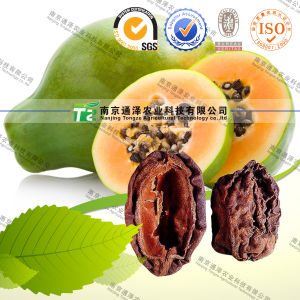 100% Pure Natural Herb Medicine Chaenomeles Speciosa pictures & photos