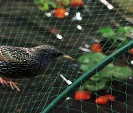 Extruded Anti-Bird Net