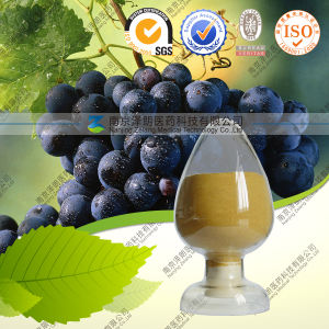 Red Grape Skin Extract Resveratrol Grape Skin Pigments pictures & photos
