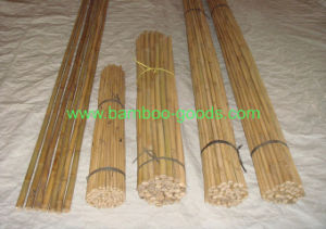Natural Bamboo Tonkin Bamboo Canes for Plant pictures & photos