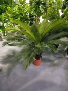Artificial Plants of Cycas Gu-Jf563 pictures & photos