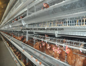 Best Price & Good Quality Poultry Farm Egg Layer Chicken Cages Equipment System (H Type) pictures & photos