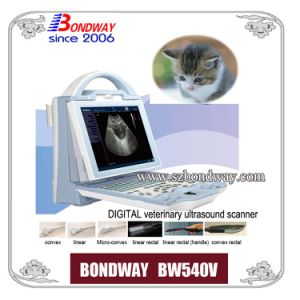 Veterinary Ultrasound -for Imaging Horse, Cow, Sheep, Goat, Pig, Cat, Dog
