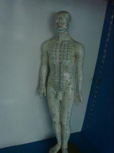 Acupuncture Point Modle pictures & photos