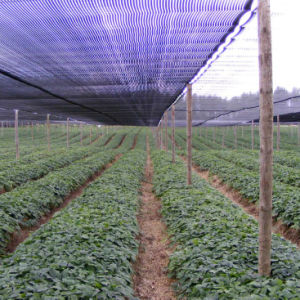 HDPE Agricultural Green Shade Net for Vegetable and Fruit pictures & photos