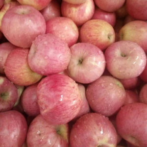 High Quality of Fresh Red Qinguan Apple pictures & photos