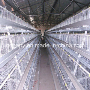 Automatic Chicken Cage Feeding and Drinking System pictures & photos
